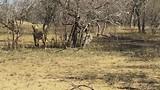 zuid Afrika deel 1