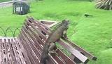 Leguanen park :-)