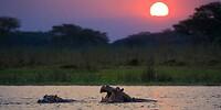 Nijlpaarden en een prachtige zonsondergang