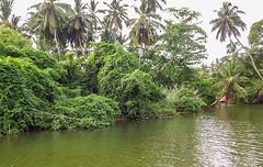Sri Lanka dag 1k