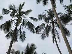 Sri Lanka dag 1s