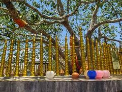 Sri Lanka dag 3k