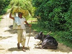 Sri Lanka dag 12d