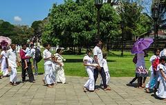 Sri Lanka dag 12p