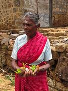 Sri Lanka dag 13-14 l