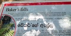Sri Lanka dag 15n