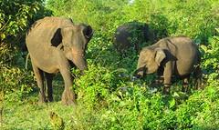 Sri Lanka dag 16v