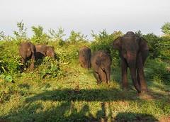 Sri Lanka dag 16w
