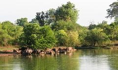 Sri Lanka dag 16x