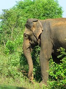 Sri Lanka dag 16ag