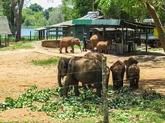 Sri Lanka dag 16al