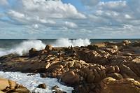 Zeehonden aan de kust