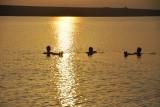 vrijdagmorgen 06.00u zonsopgang aan de Dode Zee