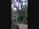 Kijk eens wie daar aan komt,  onze Gibbon aan de langste kabel (800mtr) in Azië.