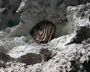 Een van de vele bijen nesten in de Sinkhole van Upherston