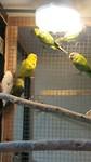 De vogels waarvoor het allemaal bedoeld was