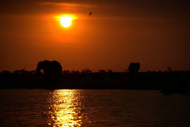 Zonsondergang in Chobe NP
