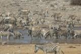 Zebra's in Etosha