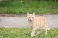huis kat