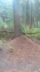Obstakel wildplassen rode mierenhoop