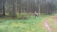 Schitterend bos met heel veel mos