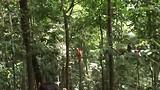 201706 Bukit Lawang Jungle Big Male