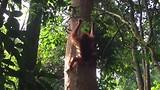 201706 Bukit Lawang Jungle Trek