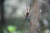 Spinnetje onderweg