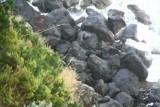 Zoekplaatje naar de Seals