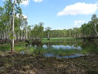 Tabletop Swamp, Litchfield National Park