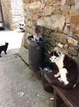 Spaanse kattebak.