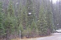 Sneeuw valt vroeg dit jaar