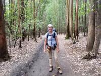 Eucalyptus bos, bijna in Pedrouzo