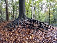 Mooie boom in Staelduinse bos