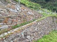 kriskras door de wijnvelden
