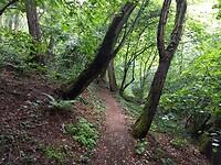 ook in het bos smalle paden tegen de helling, op weg naar Wollendorf