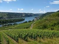 wijngaarden bij Lorch