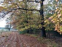 Herfstkleuren in boswachterij Schoonloo (2)
