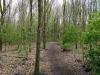 jong bos en jong groen