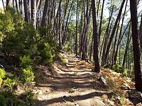 Breed bospad op weg naar de bergpas Bocca di Larata