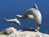Dolfijnen moeten er ook zijn