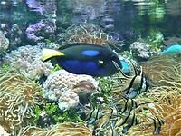 Sea Life Sydney Aquarium - Darling Harbour.