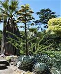Botanische Tuin in Melbourne.