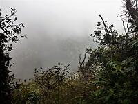 Mount Brinchang - Cameron Highland.