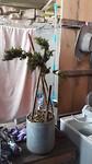 Wietplant in het hostel😂
