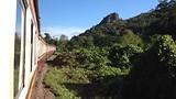 Jungle trein
