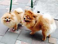 Schattige donzige hondjes