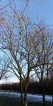 Raar dat de appeltjes aan deze boom er nog aanhangen, eind januari