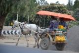 blog 3 - Lokaal vervoer-001