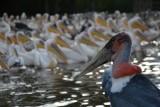 blog 4 - Vogels bij Lake Ziway-001